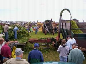 Cutting corn with a silage cutter.